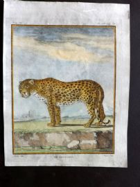 Buffon First Edition C1770 Antique Hand Col Print. Leopard 9-14